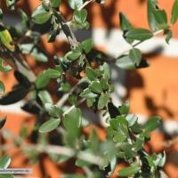 olive-11-04-16-1