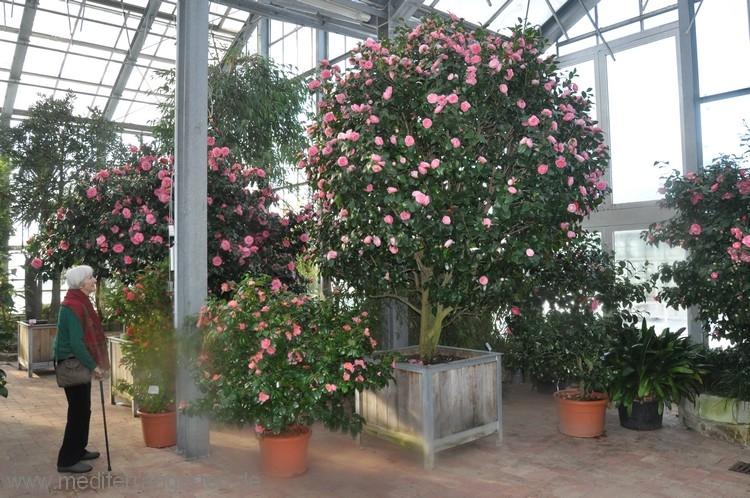 botanischer-garten-05-01-2012