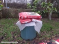 wollemia-19-01-2014-3